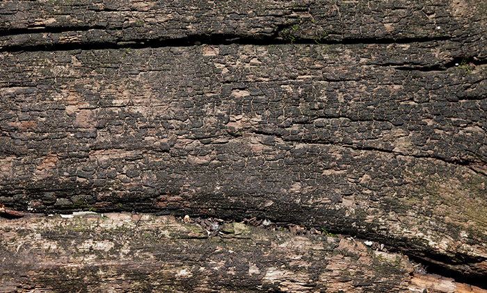 8 High-Resolution Textures: Aged Wood